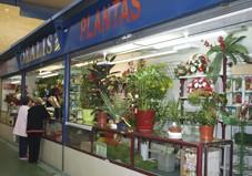 Flores Oxalis